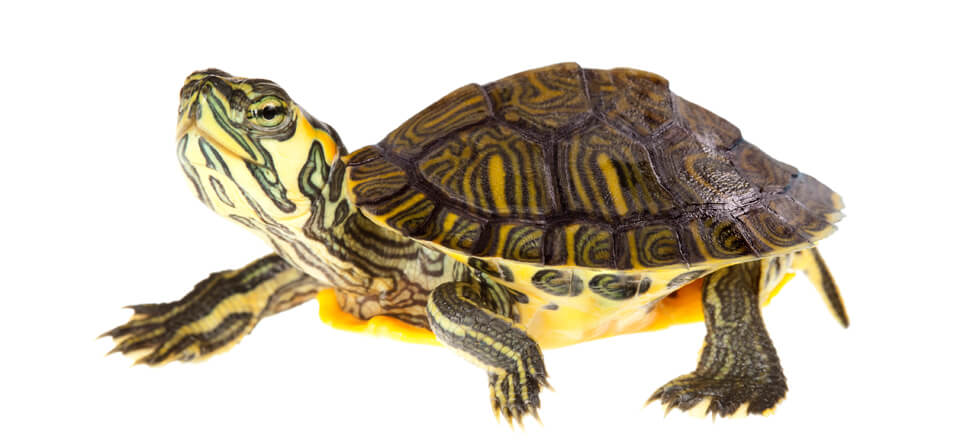 Are you a candidate for the golden turtle award?